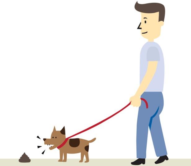 Cane Che Mangia Le Feci Conosco Il Cane