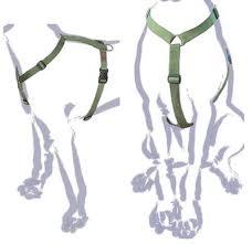 Come mettere la pettorina al cane   Come si mette la ...