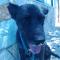 Duccio cerca una famiglia: ora sta bene !!!