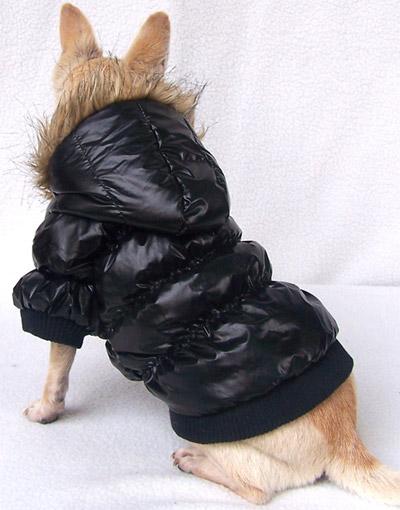 cappottini per cani: spesso sono una tortura!